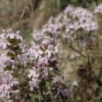 Fleurs à la sortie du ruisseau d'Audin que l'on descend en initiation au canyoning