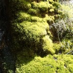 La mousse pousse facilement avec l'humidité au canyoning du Val d'Angouire - Verdon