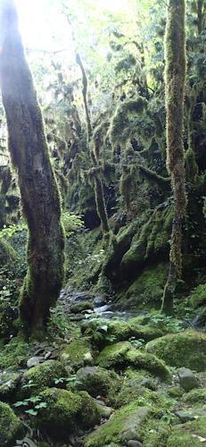 Végétation et nature en canyoning, définition du Canyoning vers Nice et Gorges du Verdon