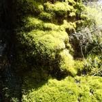 Mousse en canyoning dans le Val d'Angouire près de Marseille à l'entrée des Gorges du Verdon