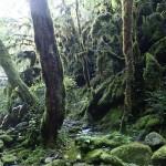 Végétation en canyoning dans la Vésubie vers Nice et Antibes dans le Riou de la Bollène